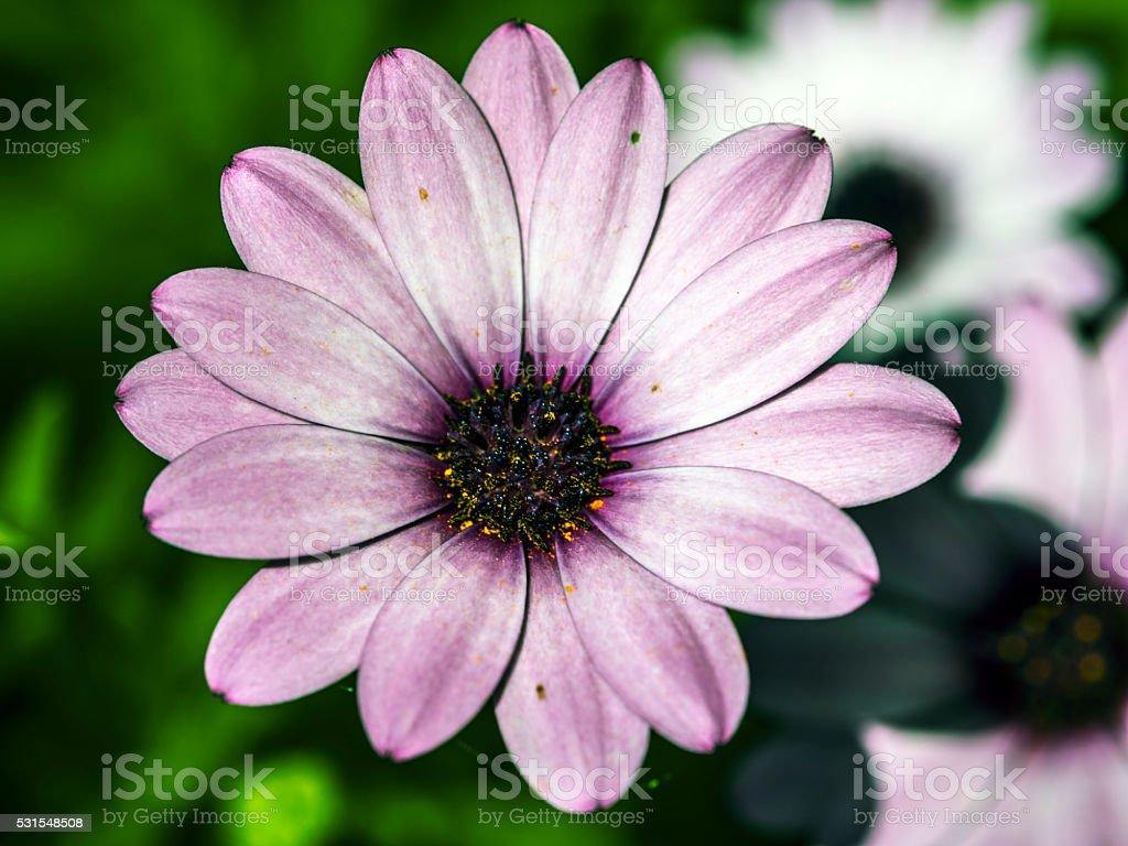 Large purple flower stock photo