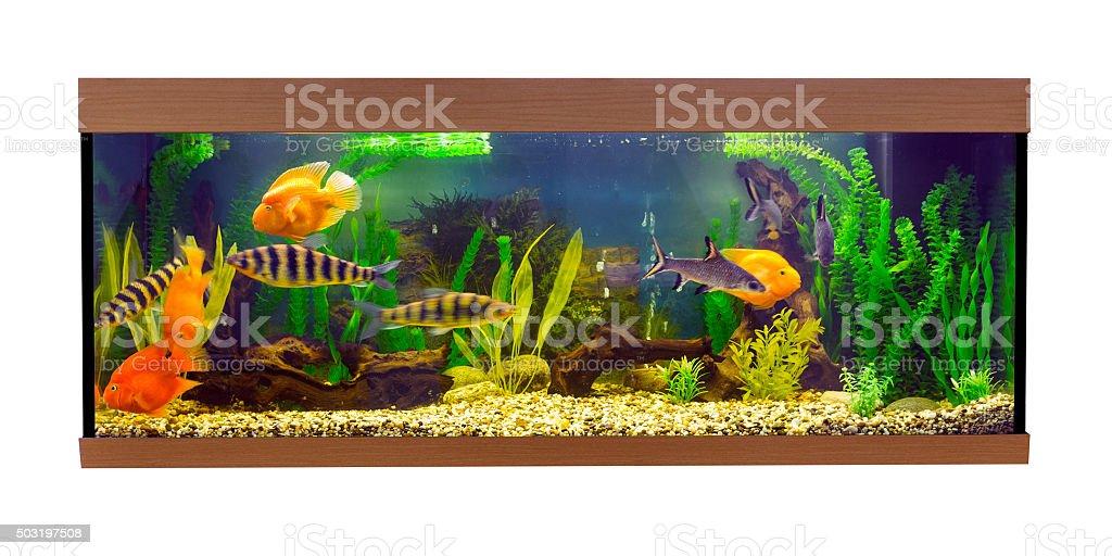 Large rectangular aquarium with tropical fish stock photo