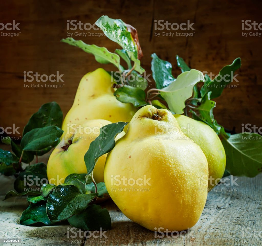 Large ripe quinces with green leaves stock photo