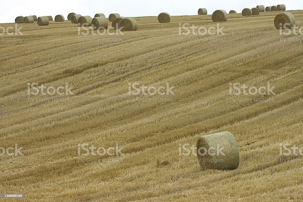 large round hay bale in France royalty-free stock photo