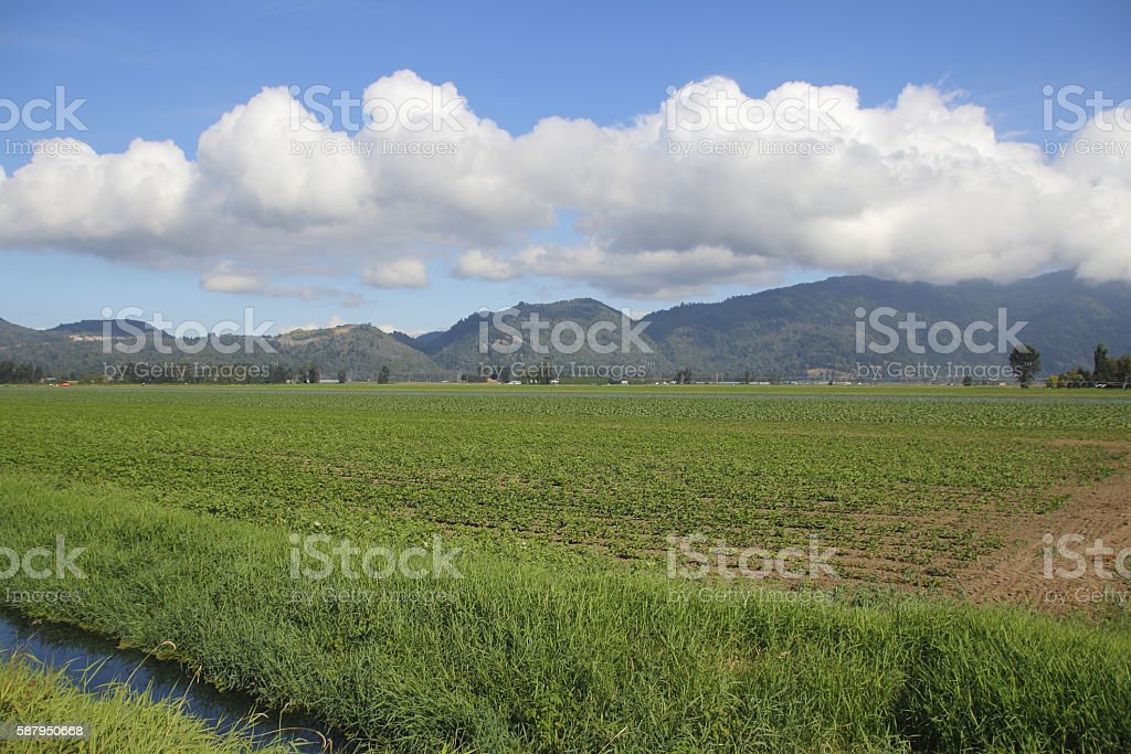Large Scale Fruit Crop Production stock photo