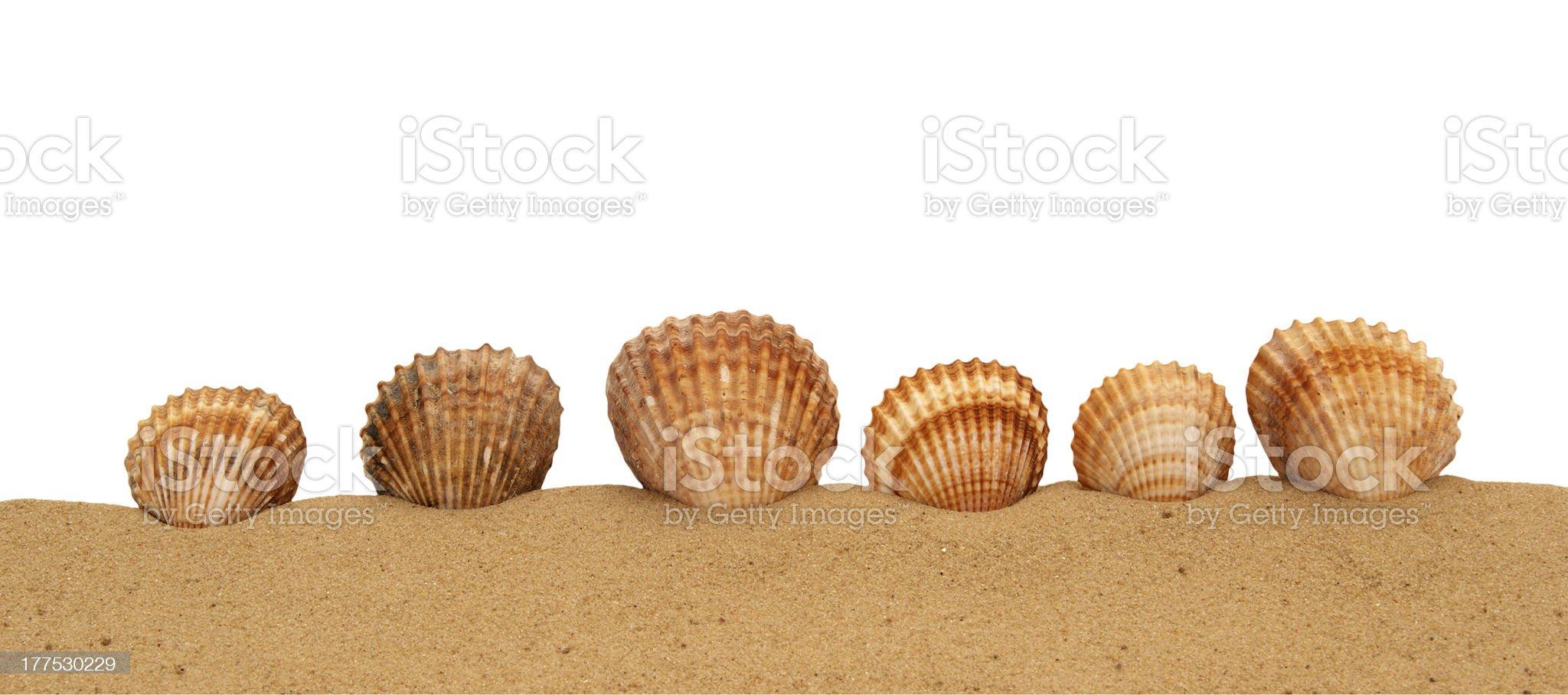 Large seashells on the sand, Studio shot royalty-free stock photo