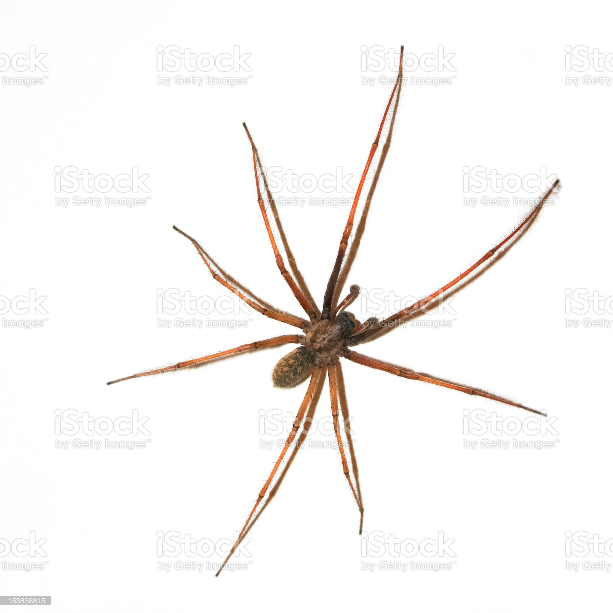 Large Spider on wall royalty-free stock photo