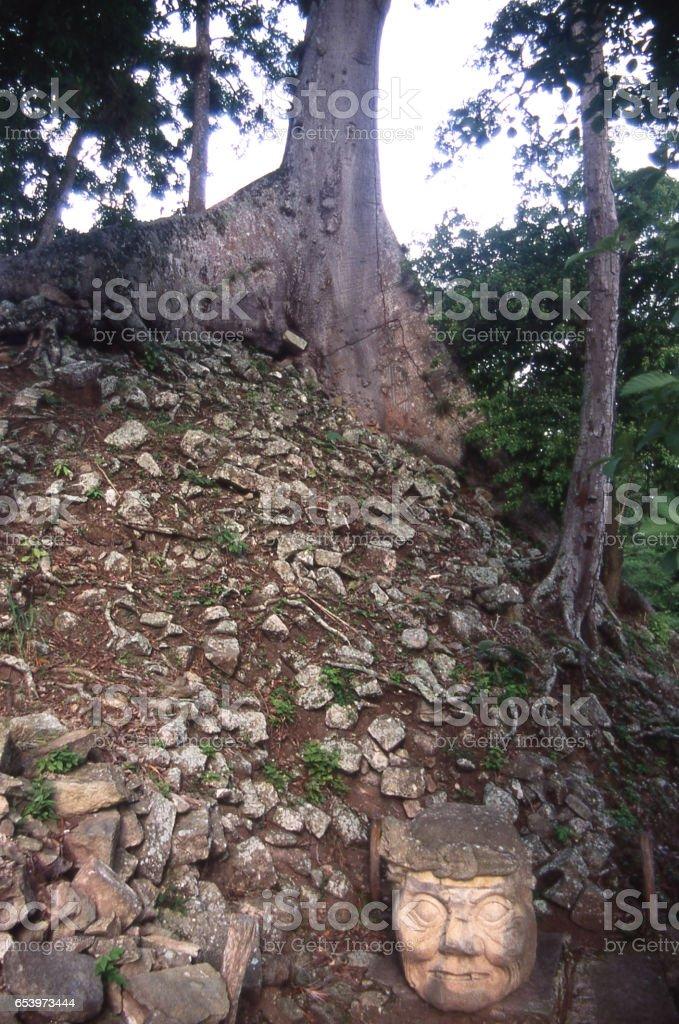 Large stone head carved by Mayan people at Copan Archeological Ruins Copan Ruinas Honduras below large Ceiba Tree stock photo