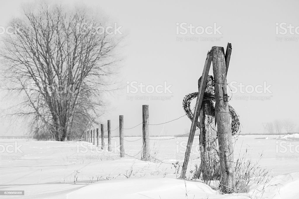 large tree and barb wire fence on a snowy field. stock photo