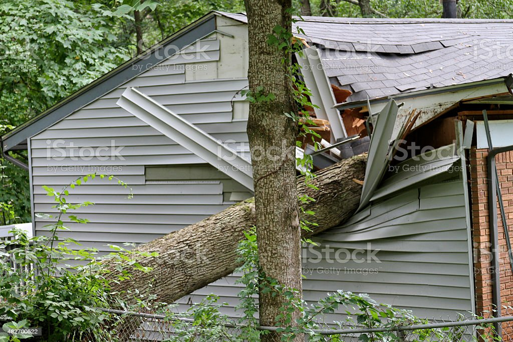 Large Tree Falls on a Small House stock photo