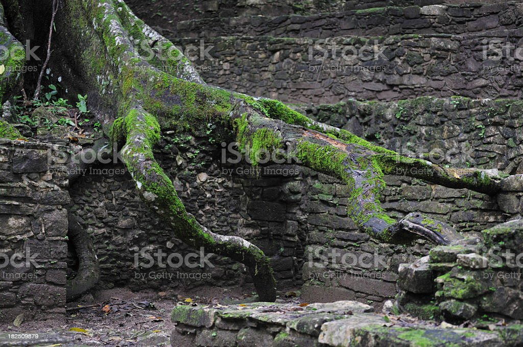 Large tree root on ruins in Palenque royalty-free stock photo