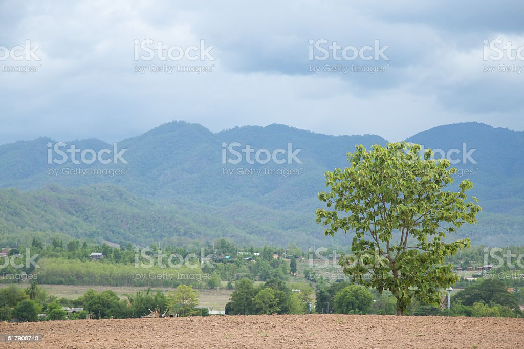 Large trees are just the same stock photo