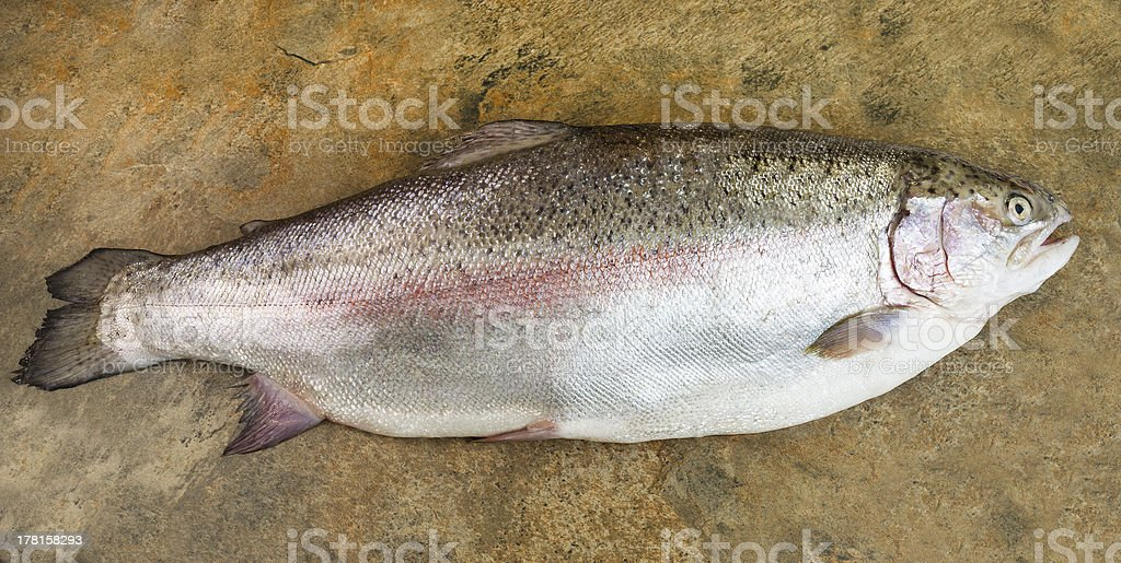 Large Trout on Slate stone Background royalty-free stock photo