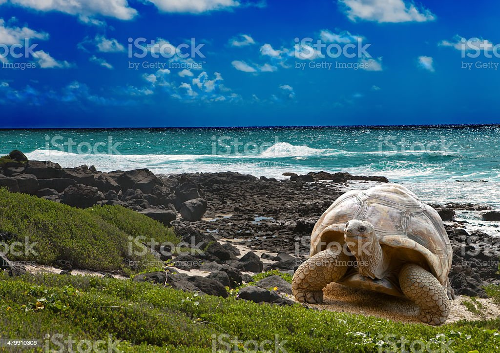 Large turtle  at  sea edge on background of tropical landscape stock photo