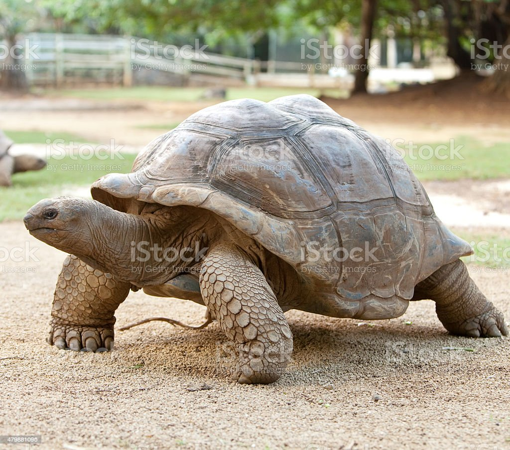 Large turtle stock photo