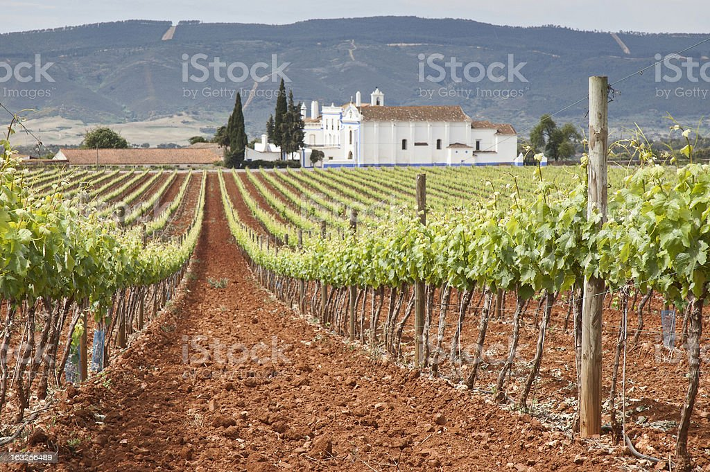 Large vineyard with a house in the background royalty-free stock photo
