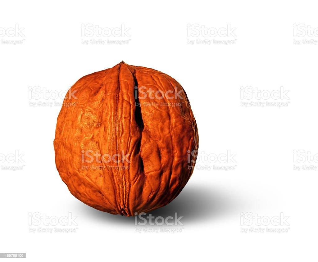 large walnut royalty-free stock photo