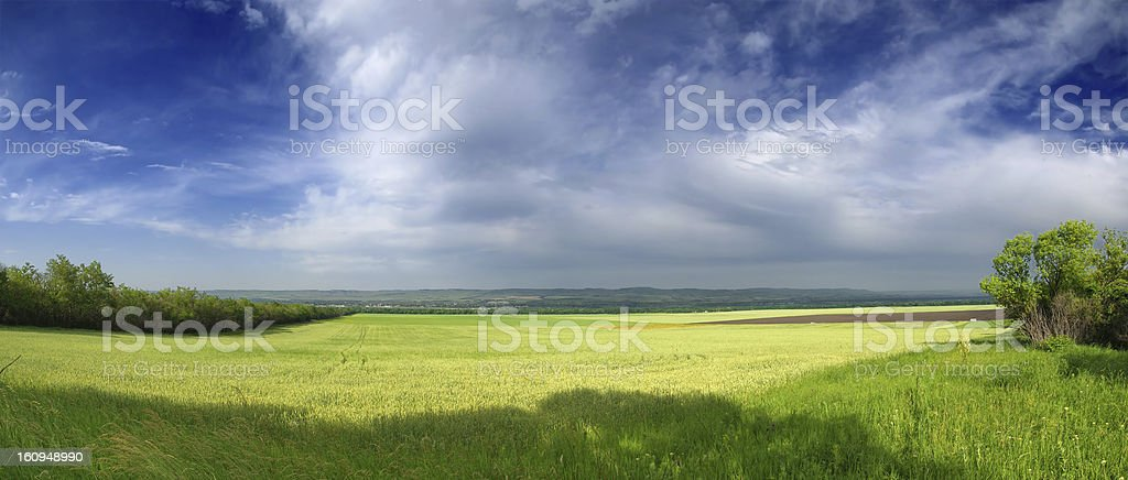Large wheat field and blue sky royalty-free stock photo