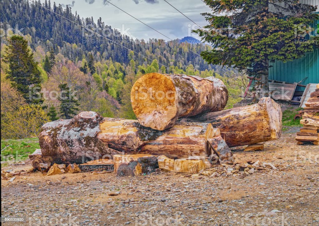 Large wooden logs with mountain forest background stock photo