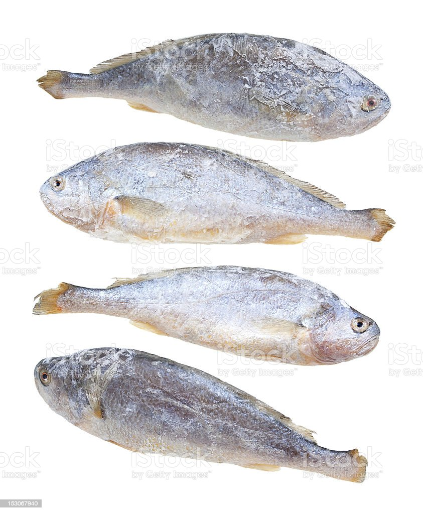 Large yellow croaker stock photo