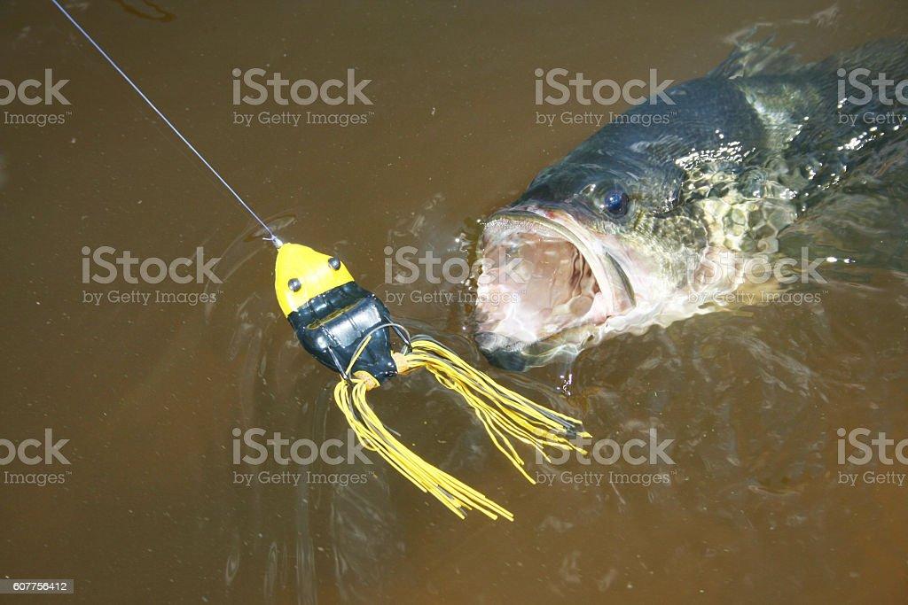 Largemouth Bass 7240 stock photo
