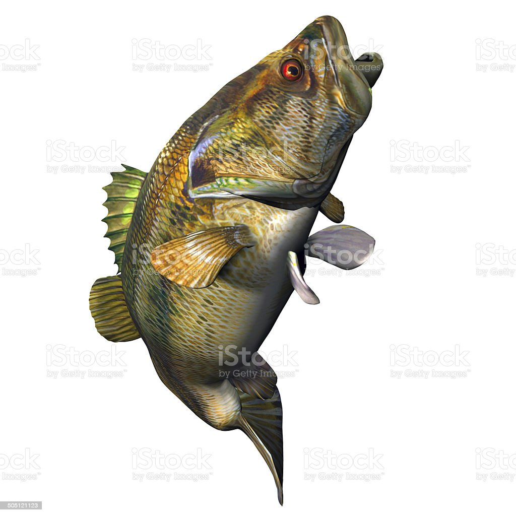 Largemouth Bass Strike stock photo