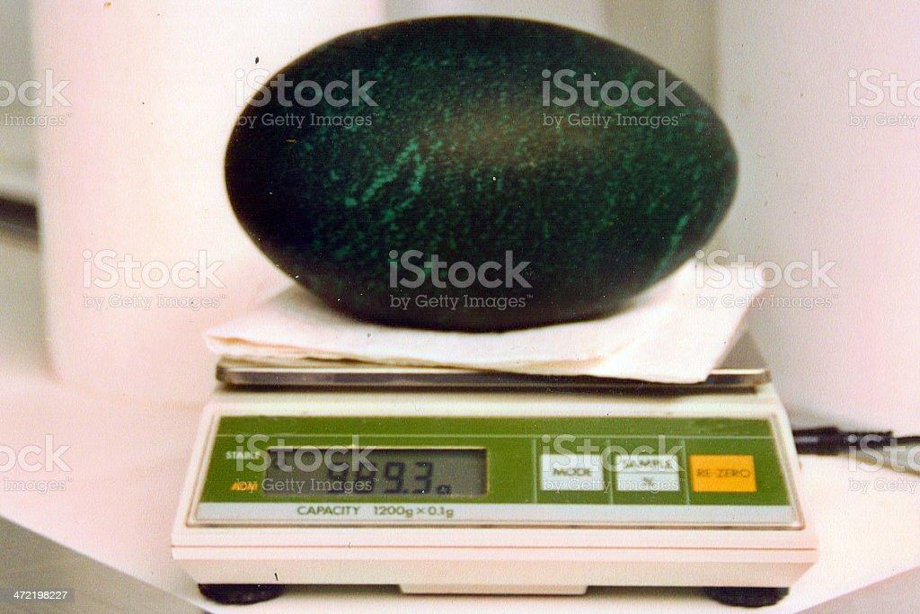 Largest egg stock photo