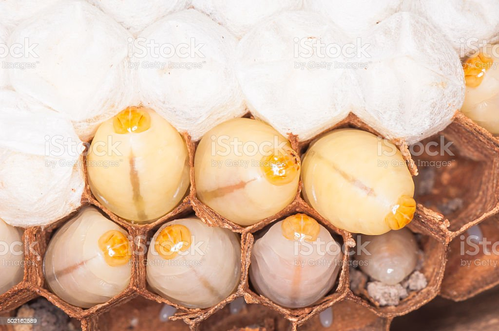 Larva in the nest royalty-free stock photo