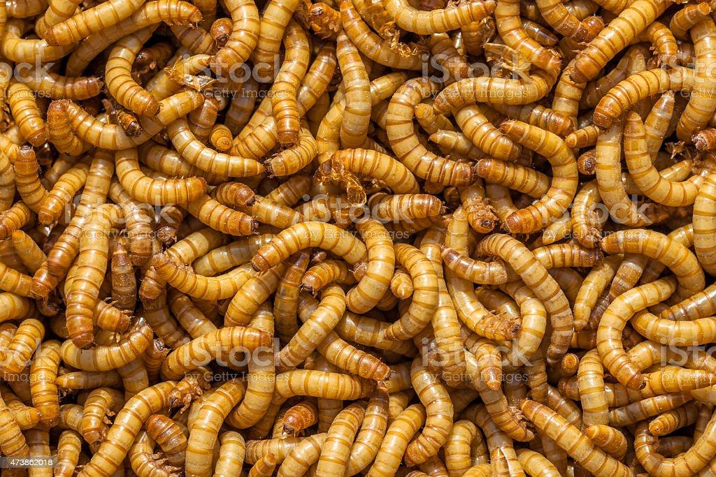 Larvae Background stock photo