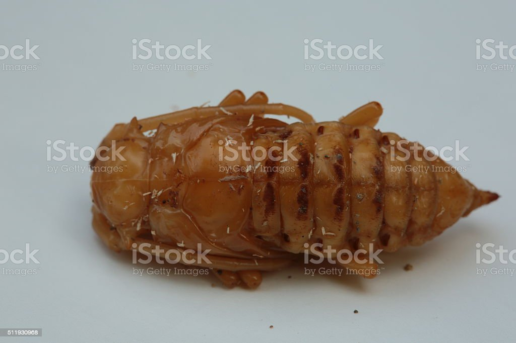 Larval beetles stock photo