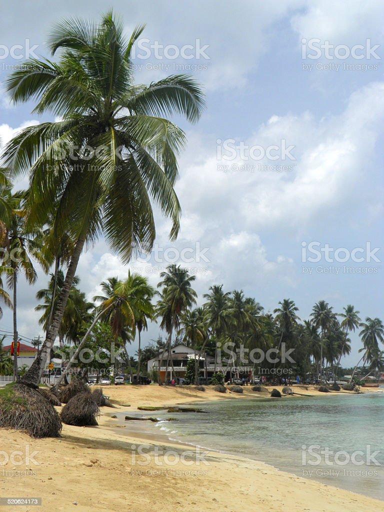 las terrenas playa caribeña de la República Dominicana foto de stock libre de derechos