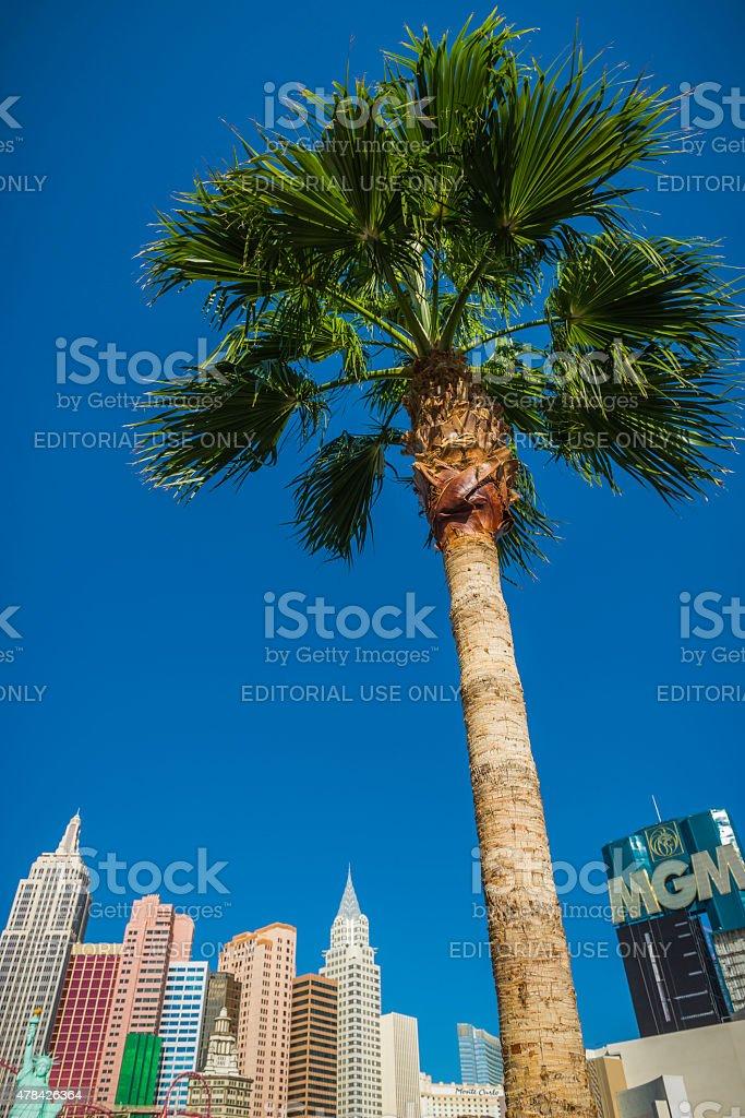 Las Vegas palm tree overlooking casinos on The Strip Nevada stock photo