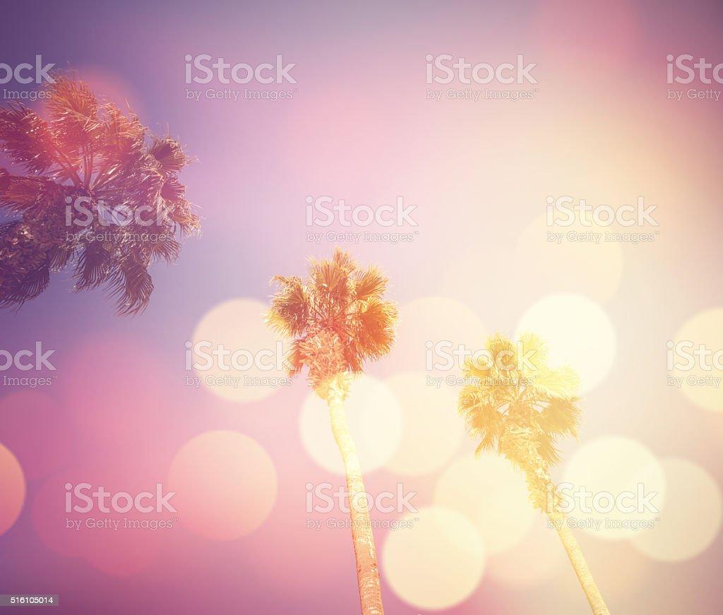 Las Vegas Palm Trees stock photo