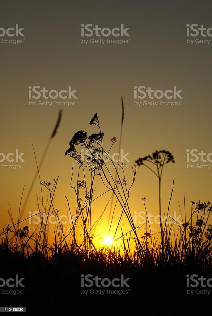 Last beams of the sun royalty-free stock photo
