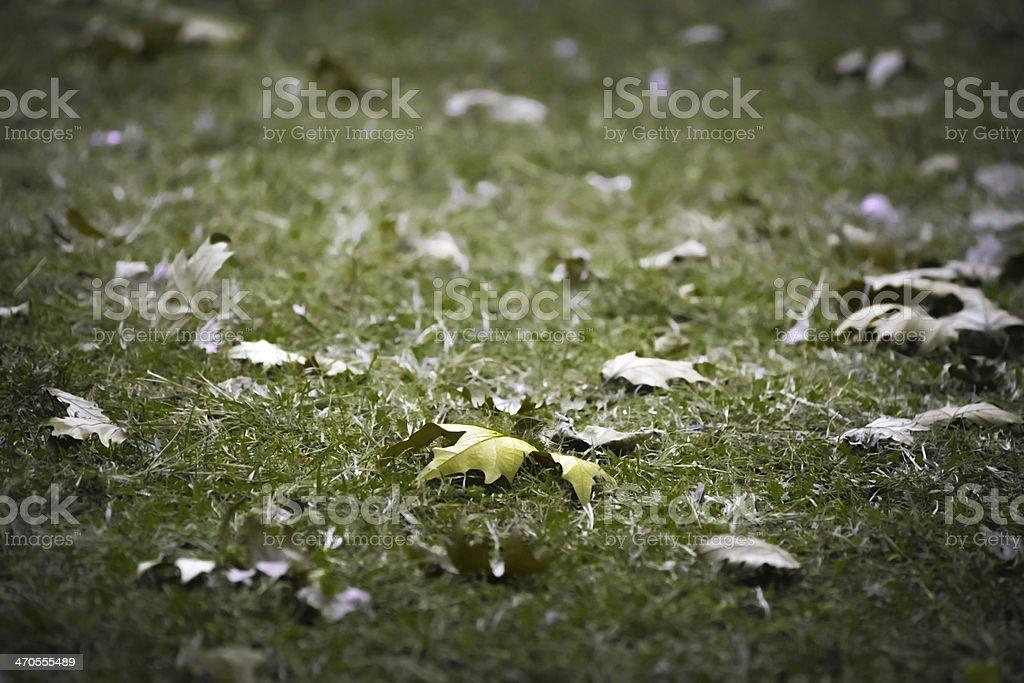 Letzte Blatt Herbst Lizenzfreies stock-foto