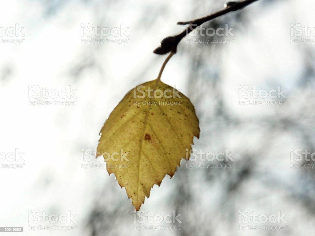 last leaf on earth royalty-free stock photo