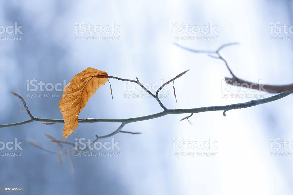 last leaf royalty-free stock photo