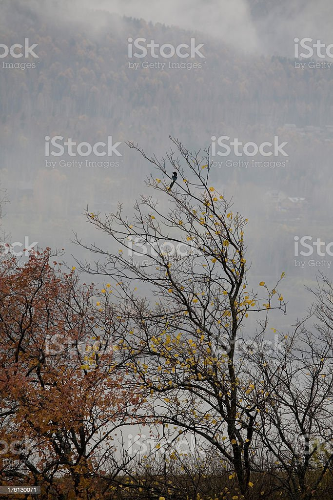 Last leaves royalty-free stock photo