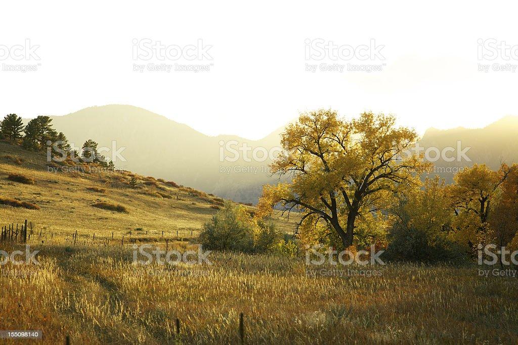 Last Light Through the Autumn Trees royalty-free stock photo