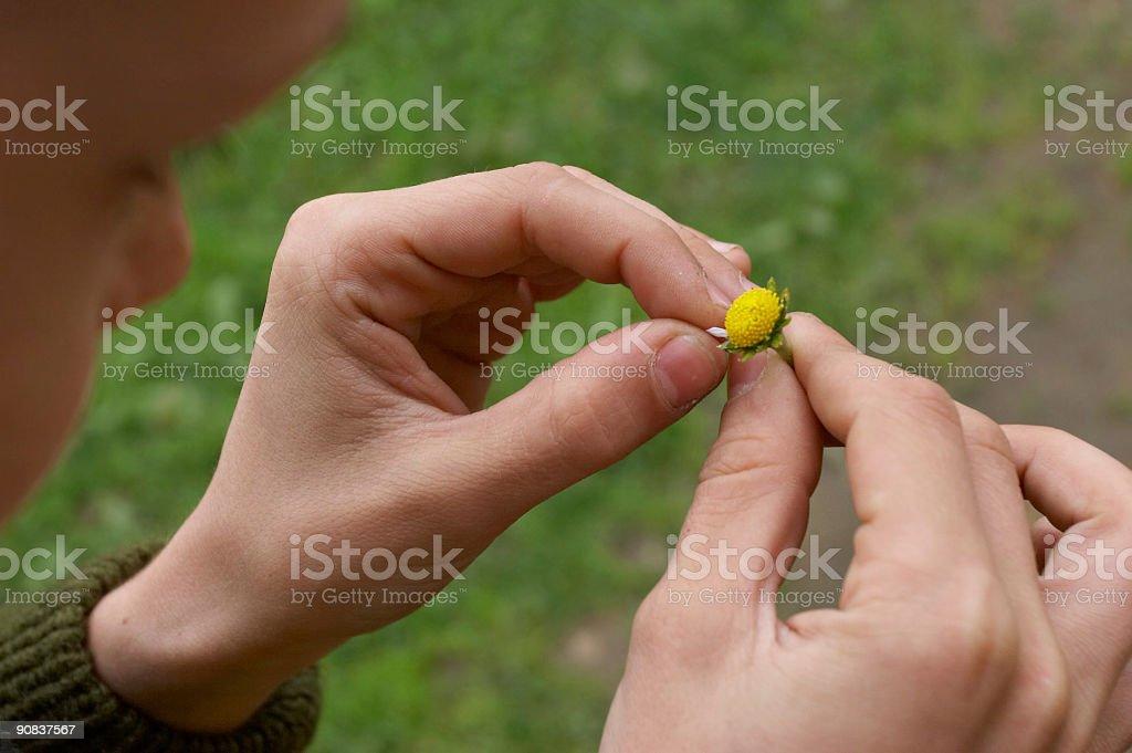 last petal stock photo