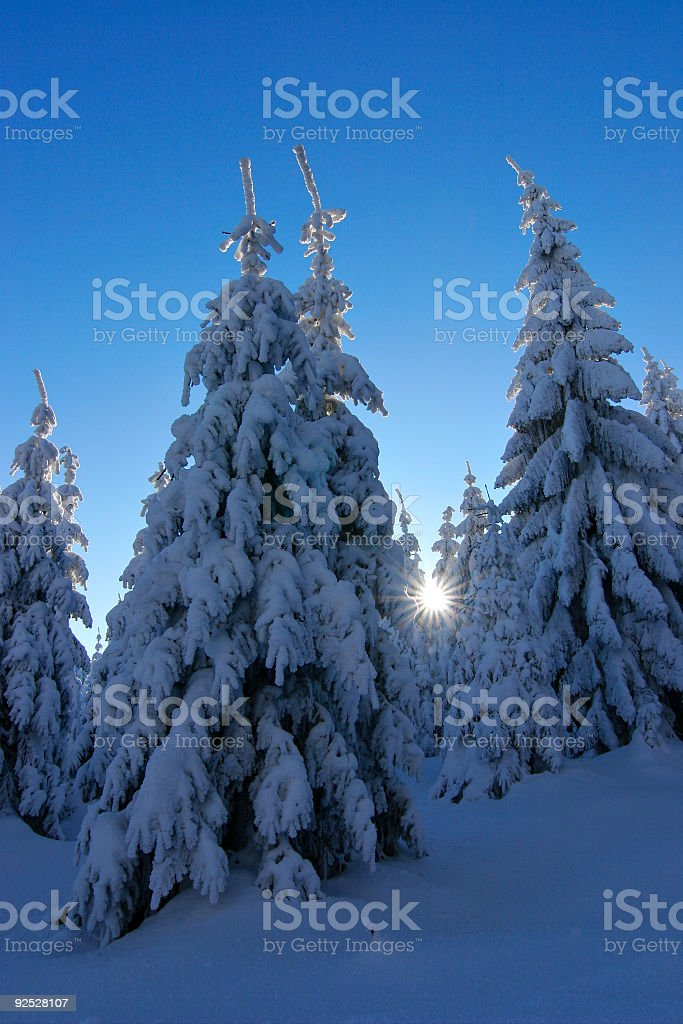 Last Sunbeam in Winter Forest royalty-free stock photo
