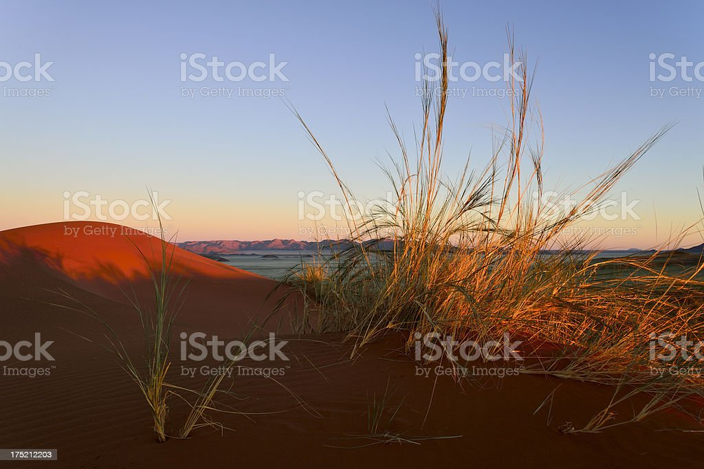 Last sunlight on dry grass royalty-free stock photo