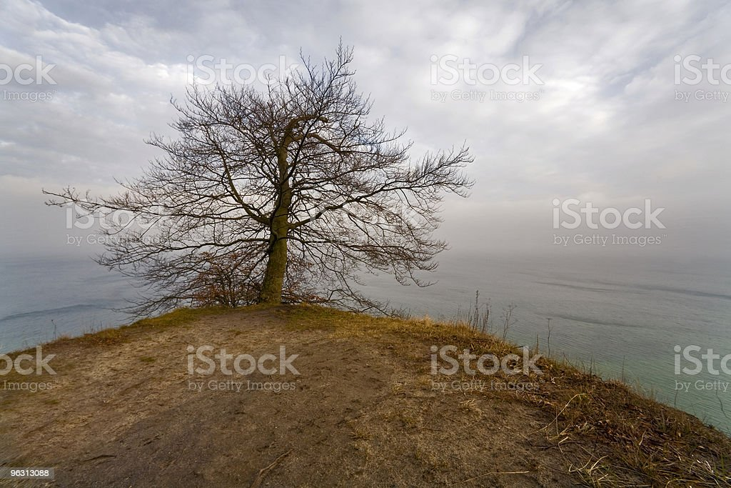last tree at the end of our world stock photo
