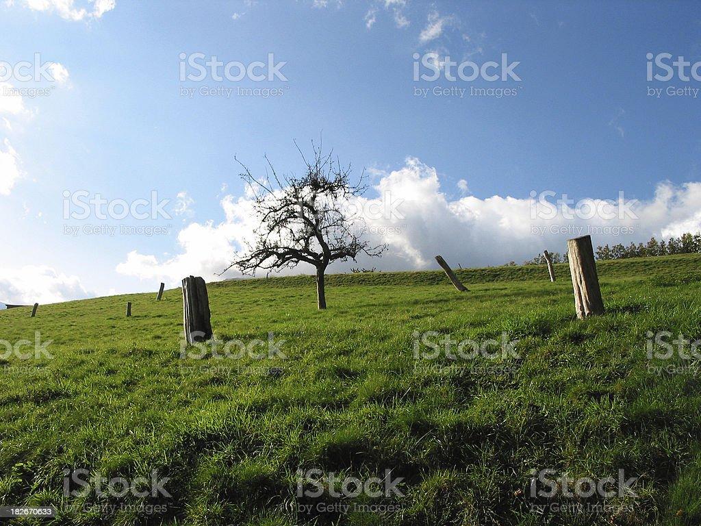 Last Tree stock photo