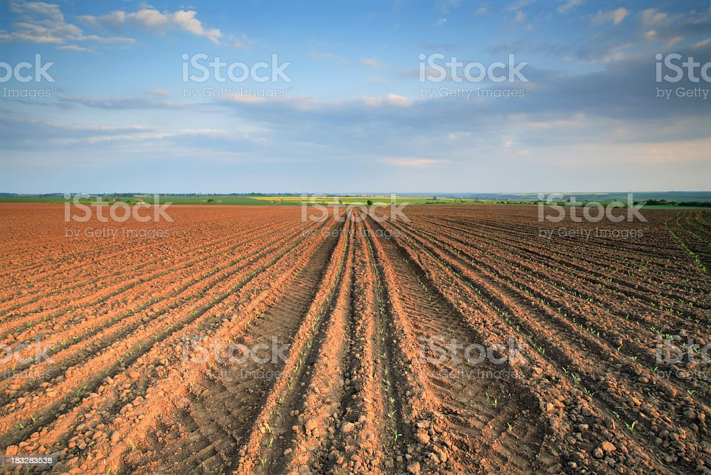 Late Afternoon Field stock photo