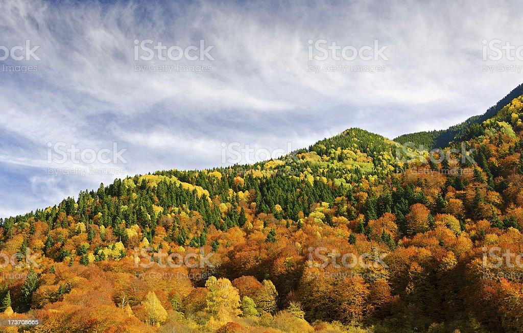 Late autumn royalty-free stock photo