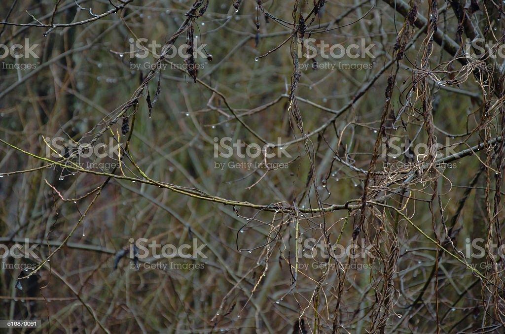 Final de Outono foto de stock royalty-free