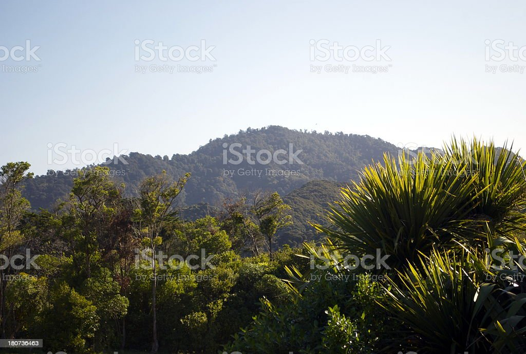 Late Evening Sun over NZ Native Bush stock photo