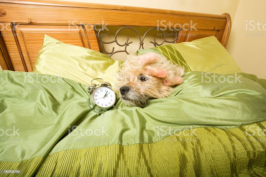 late royalty-free stock photo