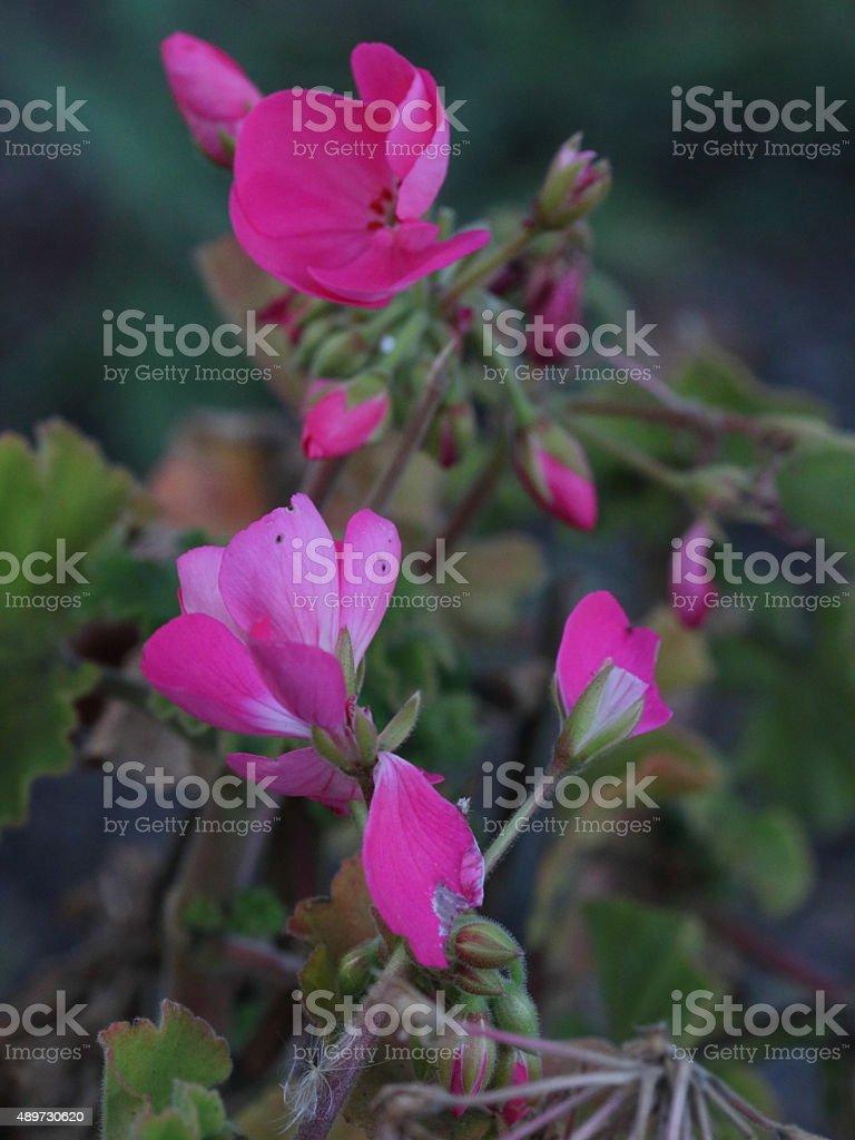 late season bloom stock photo