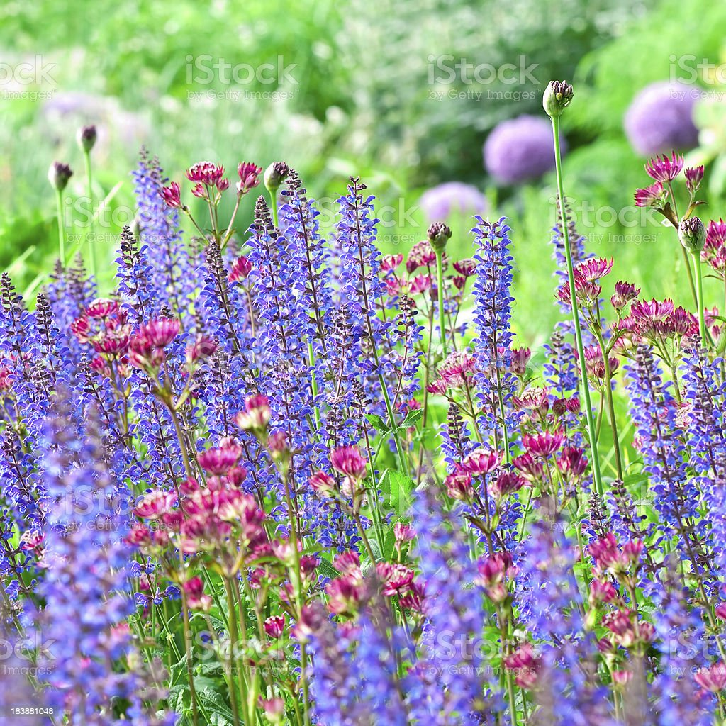 Late spring/early summer garden - V royalty-free stock photo