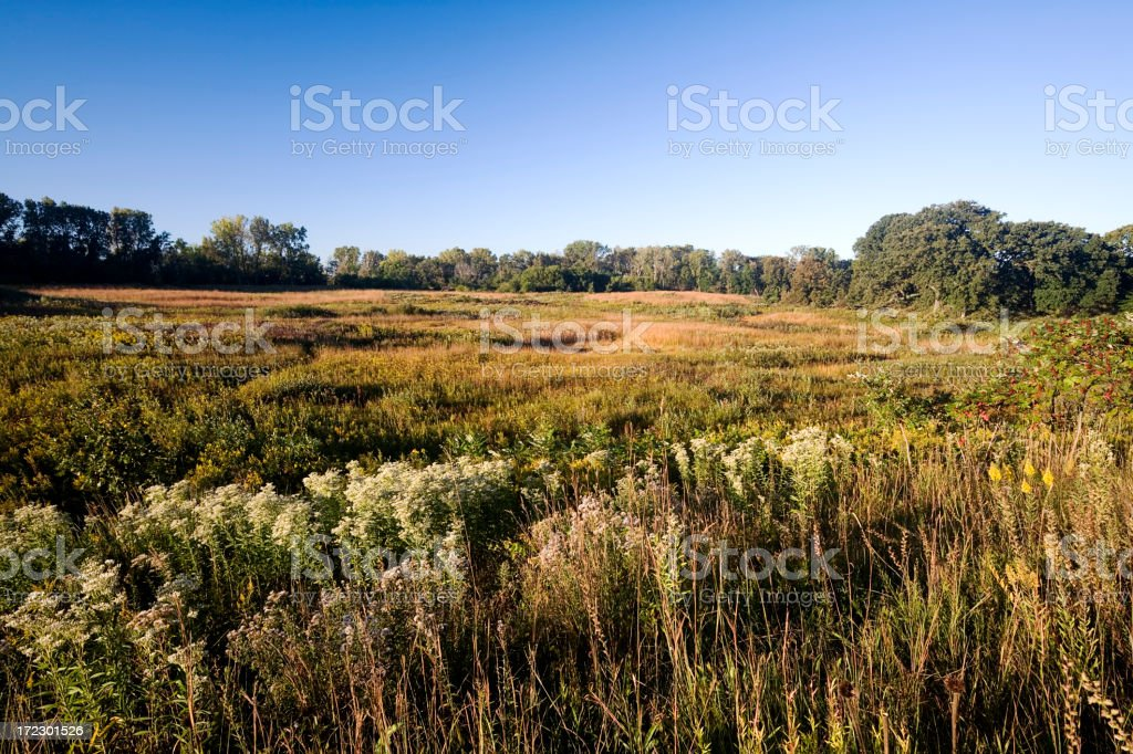Late Summer at the  Fen royalty-free stock photo