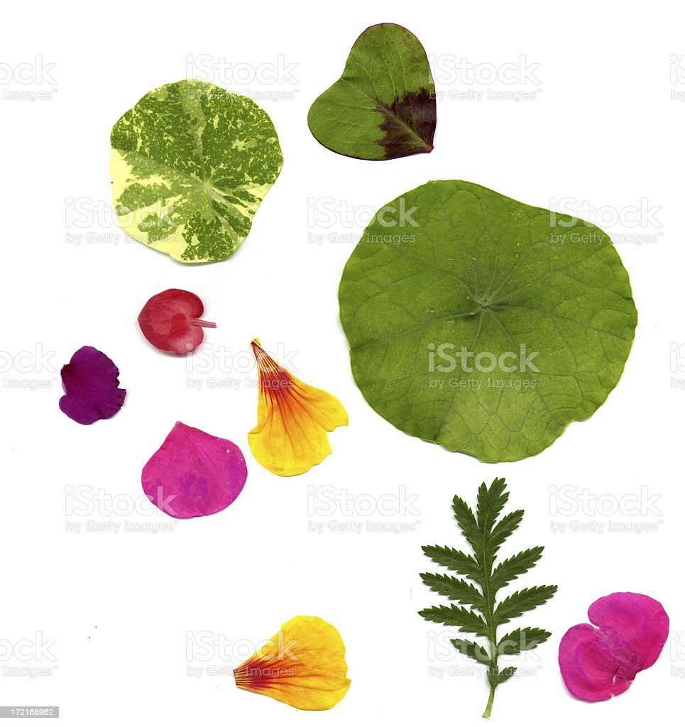 Late summer flower petals and leaves - Design Elements stock photo