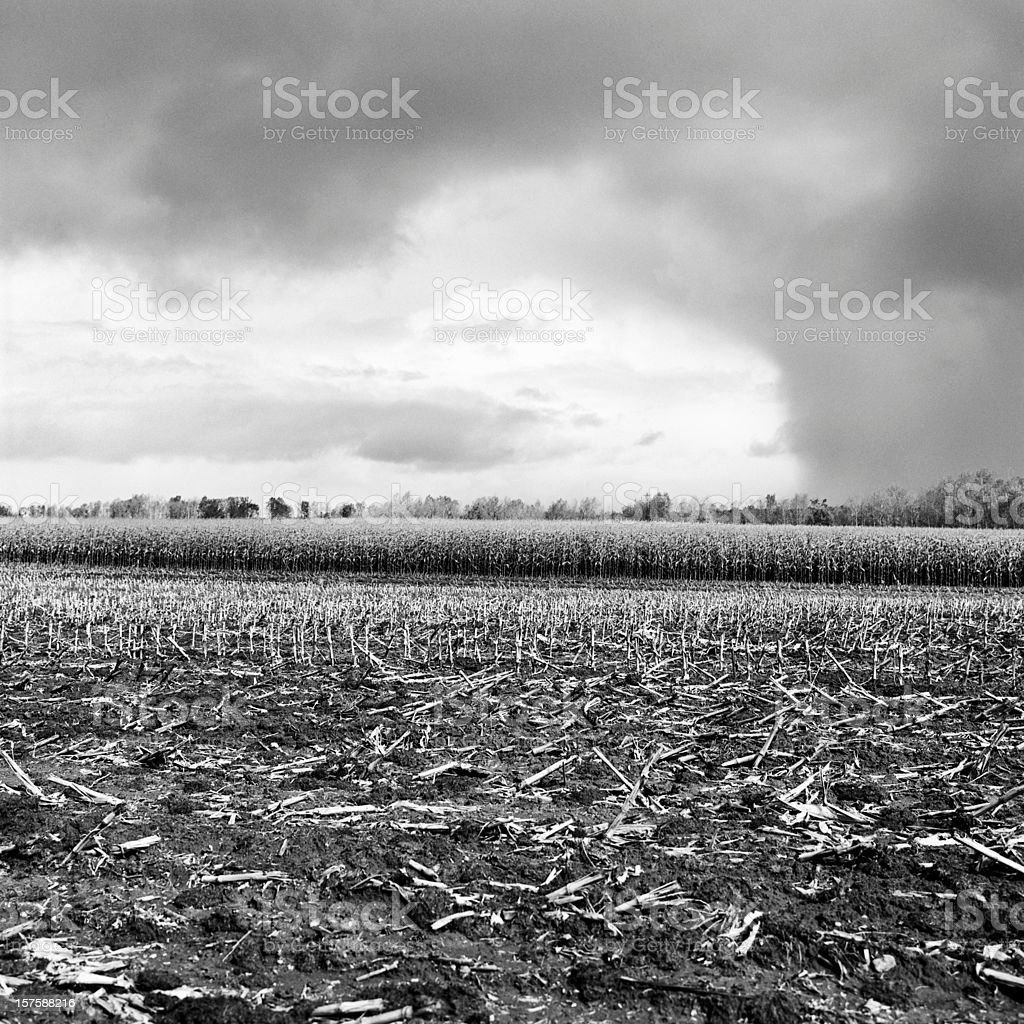 Late summer storm front moving across cornfields royalty-free stock photo